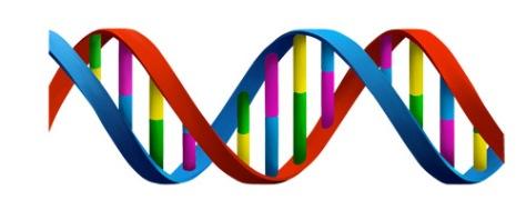DNA-medium